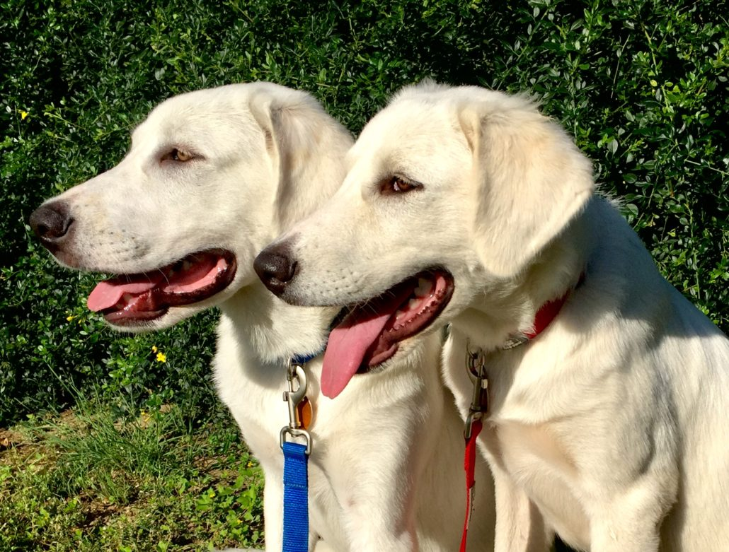 Grief Therapy Dogs | Cremation Advocates by Putnam